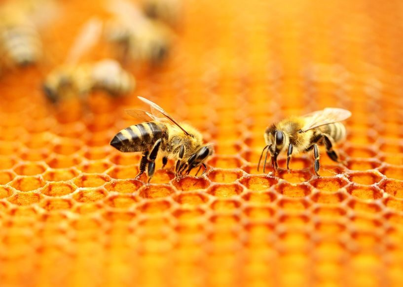kostbare Bienenprodukte