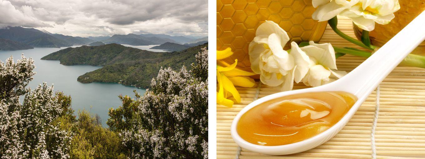 Manuka-Honig für Ihr Wohlbefinden
