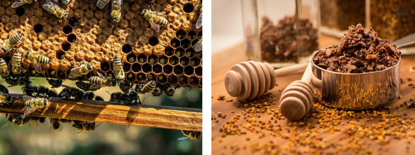 Propolis und Bienen